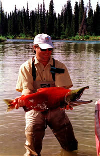 Gulkana River Sockey Red Salmon - Full Spawn Phase - ALASKA RAFT CONNECTION
